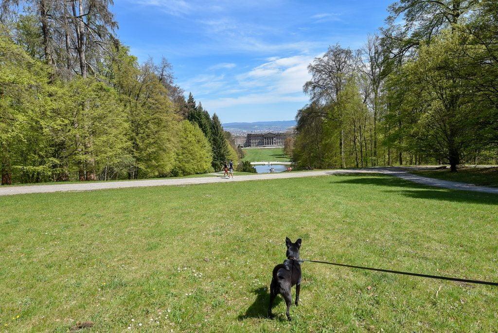Z psem na wycieczkę
